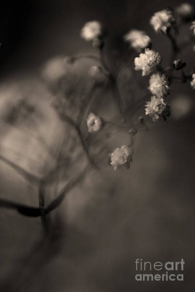 Photograph - Tiny Flower Heads by Clayton Bastiani