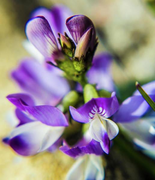 Photograph - Tiny Flower by Tyson Kinnison