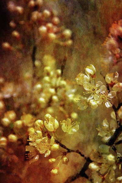 Photograph - Tiny Gold 9654 Idp_2 by Steven Ward