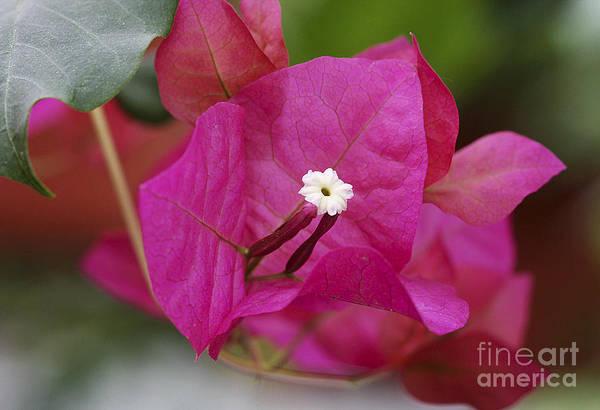Photograph - Tiny Little White Flower by Deborah Benoit