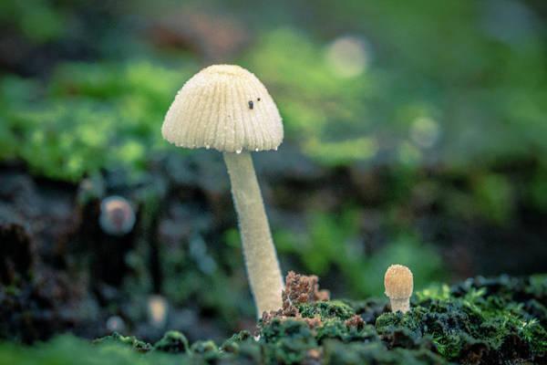 Photograph - Tiny Mushroom Jardin Botanico Del Quindio Colombia by Adam Rainoff