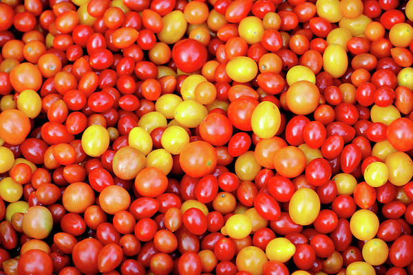 Wall Art - Photograph - Tiny Tomatoes by Todd Klassy