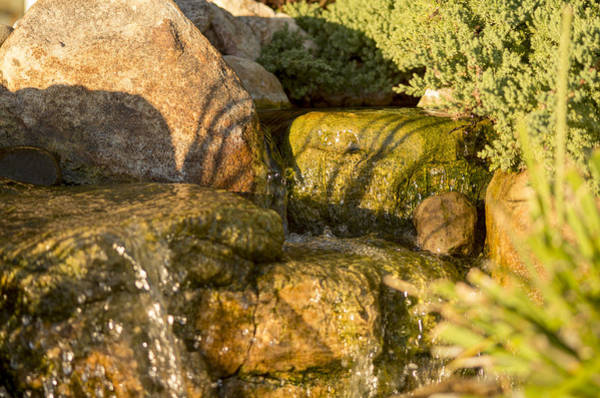 Photograph - Tiny Waterfalls by Willard Killough III