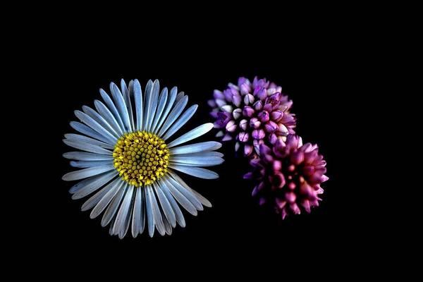Photograph - Tiny Wild Flowers On Black by Lynda Anne Williams