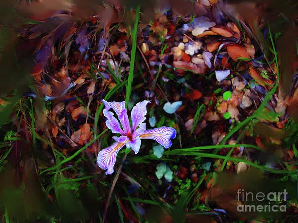 Photograph - Tiny Wild Iris by Lisa Redfern