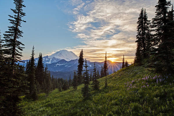 Mount Rainier Photograph - Tipsoo Field Of Summer by Mike Reid