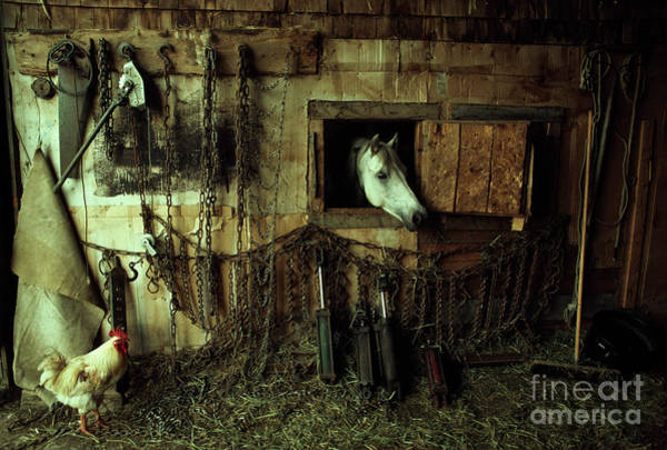 Wall Art - Photograph - Tire Chains Await The New England Snows In An Old Barn by Cary Wolinsky