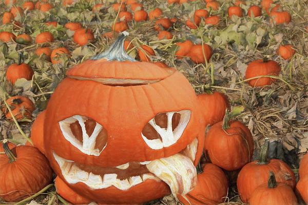 Wall Art - Photograph - Tired Pumpkin by Donna Kennedy