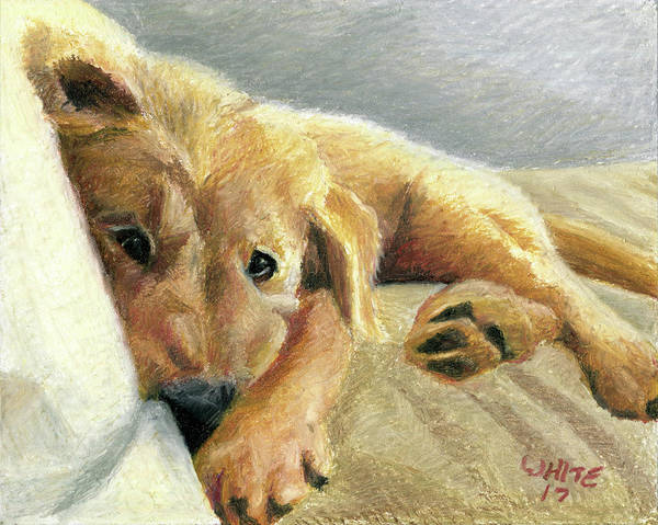 Pastel - Tired Puppy by Dominic White