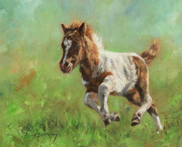 Painting - Titch. Minature Horse Foal by David Stribbling