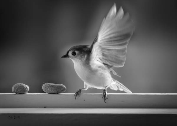 Photograph - Titmouse And Peanuts by Bob Orsillo