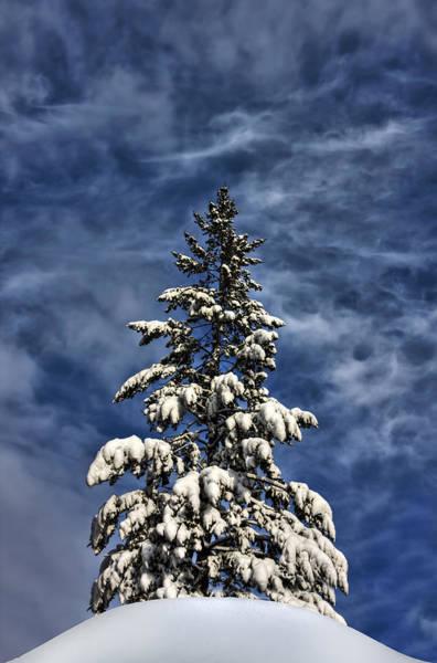 Single Tree Wall Art - Photograph - To Blue Horizons by Evelina Kremsdorf