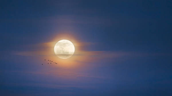 Photograph - To The Moon by Bill Wakeley