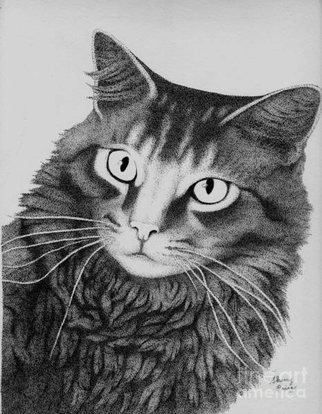 Tabby Drawing - To Thine Own Cat Be True by Sherry Price