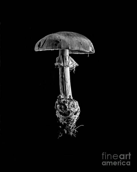 Photograph - Toad Stool by Edward Fielding