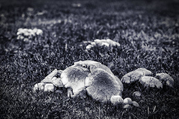 Photograph - Toadstool Monochrome by Chris Bordeleau