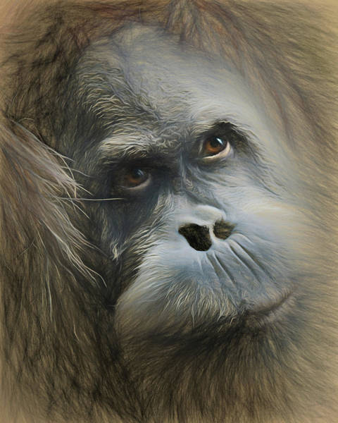 Wall Art - Photograph - Toba's Expression by Lana Trussell
