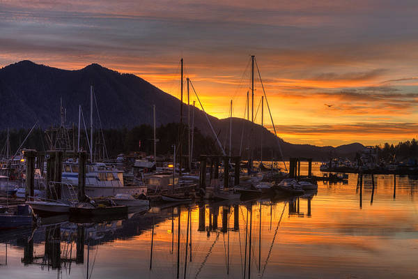 British Columbia Photograph - Tofino Docks Sunrise - A Tribute by Mark Kiver