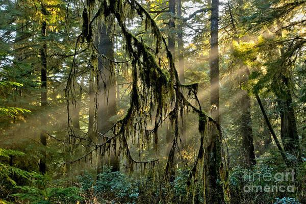 Photograph - Tofino Rainforest Rays by Adam Jewell