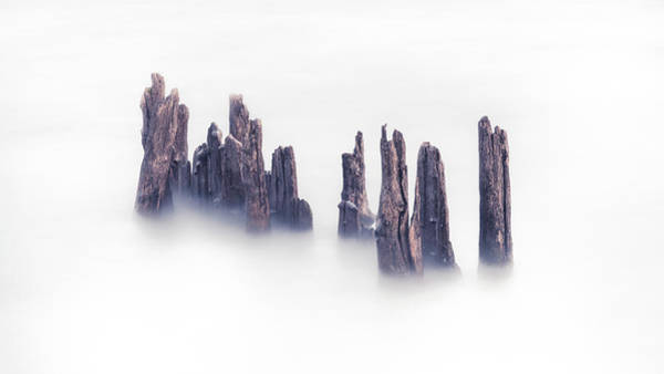 Piling Photograph - Together In Isolation by Josh Eral