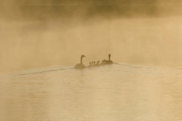 Wall Art - Photograph - Togetherness by Bill Cannon