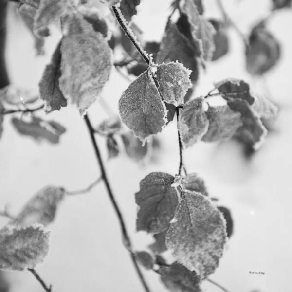 Photograph - Togetherness by Randi Grace Nilsberg