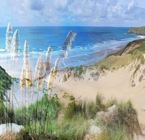Toi Tois In Coastal  Sandhills Art Print