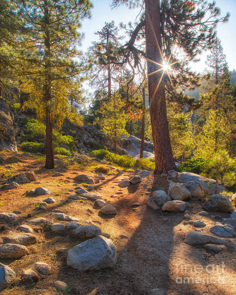 Photograph - Tokopah Falls Trail by Anthony Bonafede