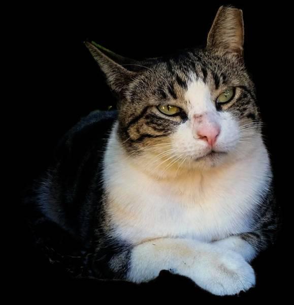 Photograph - Tom Cat by Pamela Walton