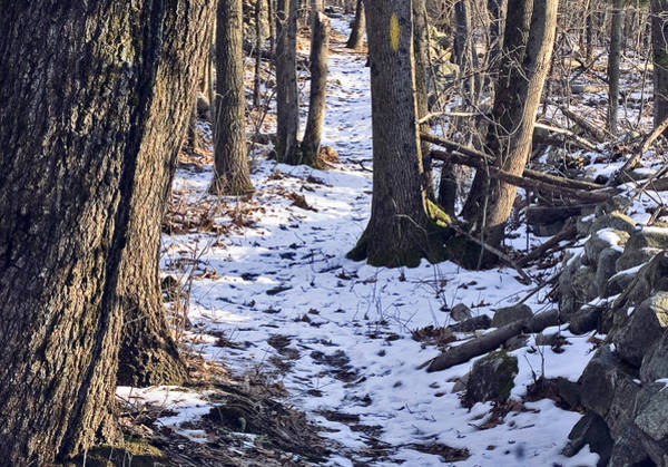 Photograph - Tom Paul Trail Winter by Frank Winters
