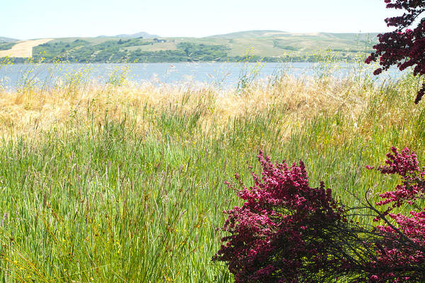Photograph - Tomales Bay Grass by Peter Dyke