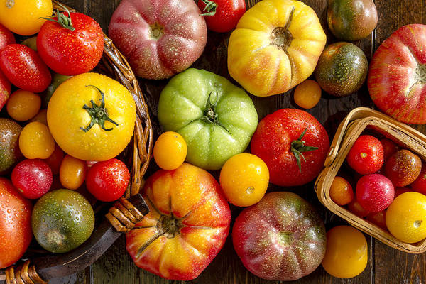 Photograph - Tomato Bounty by Teri Virbickis