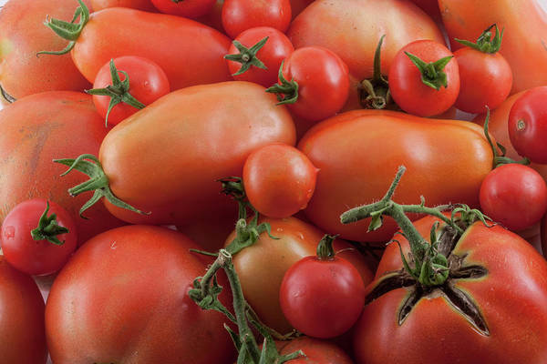 Photograph - Tomato Mix by James BO Insogna
