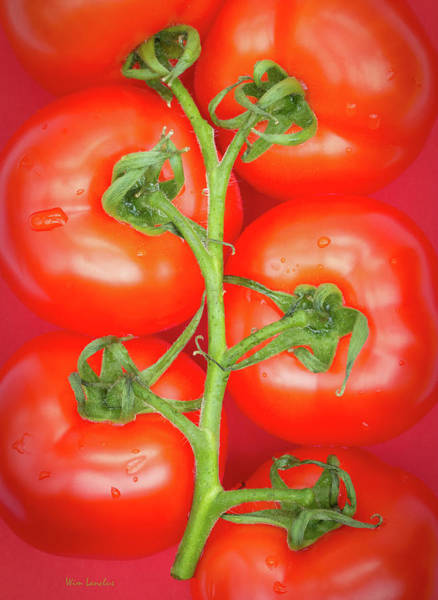 Six Wall Art - Photograph - Tomato Tree by Wim Lanclus