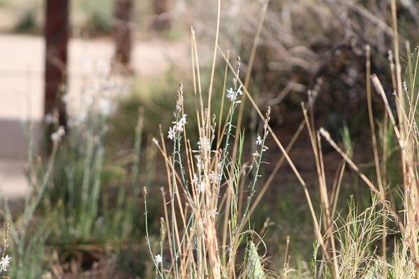 Photograph - Tombstone Wildflowers And Grass by Colleen Cornelius