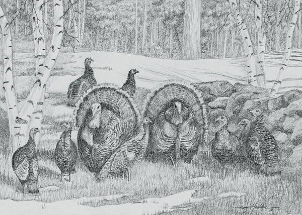Drawing - Toms In The Spring by Harry Moulton