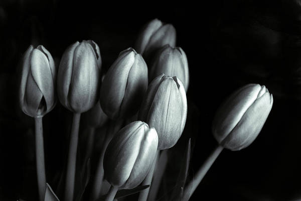 Photograph - Tonal Tulips by Jessica Jenney