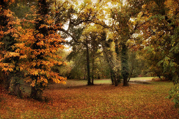 Photograph - Tones Of Autumn by Jessica Jenney