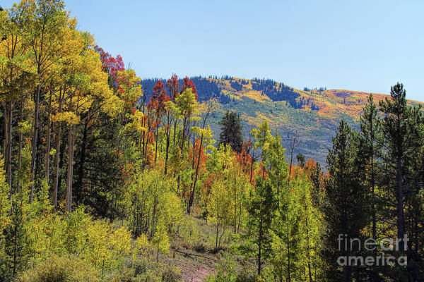 Photograph - Tongues Of Fire by Jim Garrison