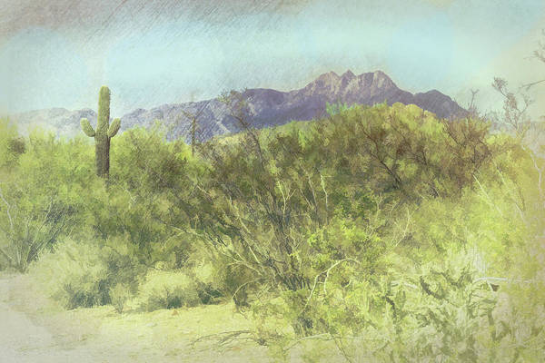 Photograph - Tonto National Forest by Grace Dillon