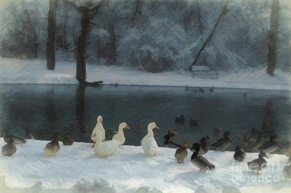 Photograph - Too Cold To Swim by Luther Fine Art