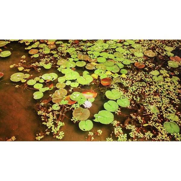 Wall Art - Photograph - Took This Amazing Photo Of Lily Pads At by Genevieve Esson