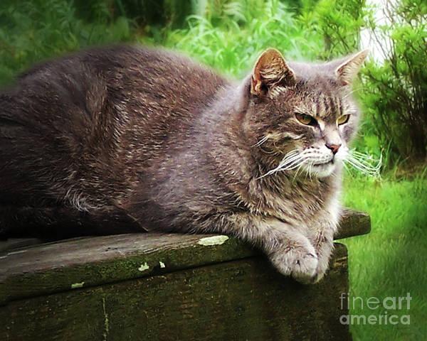 Photograph - Top Cat by Pete Hellmann