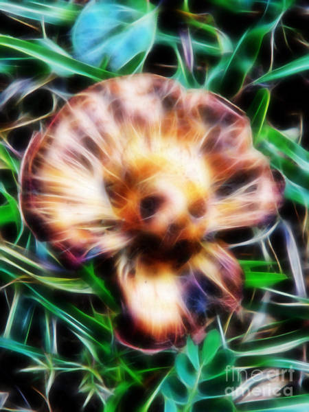 Photograph - Top Of The Mushroom by D Hackett