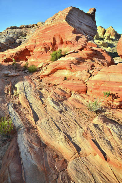 Photograph - Top Of The World In Valley Of Fire by Ray Mathis