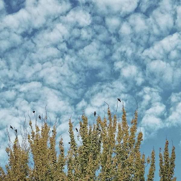 Wall Art - Photograph - Top Pigeons #birds #pigeon #trees #sky by Rafa Rivas