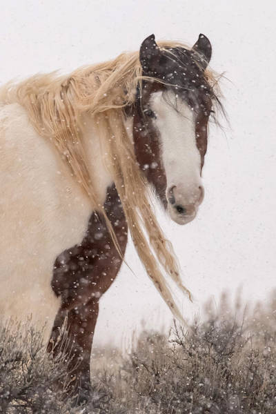 Painted Horses Photograph - Topeka In Winter by Sandy Sisti