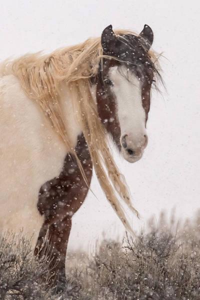 Topeka Wall Art - Photograph - Topeka In Winter by Sandy Sisti