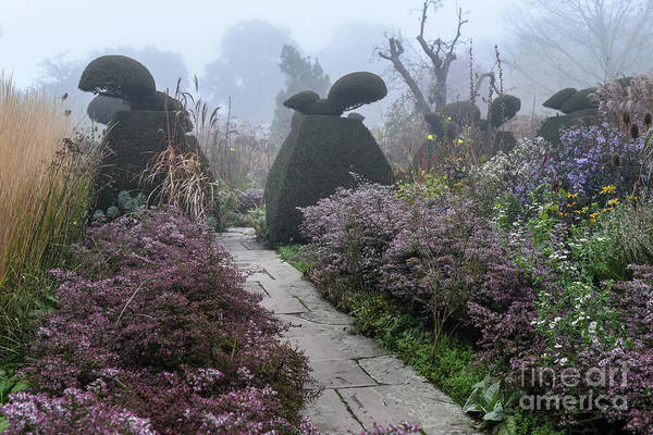 Photograph - Topiary Peacocks In The Autumn Mist, Great Dixter by Perry Rodriguez