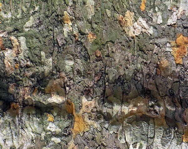 Photograph - Topography In Bark by Lynda Lehmann